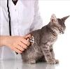 Ветеринарные клиники в Заиграево